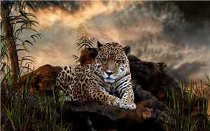 Download 40 Amazing Animals HD Wallpapers 2560x1600 Px Set 16